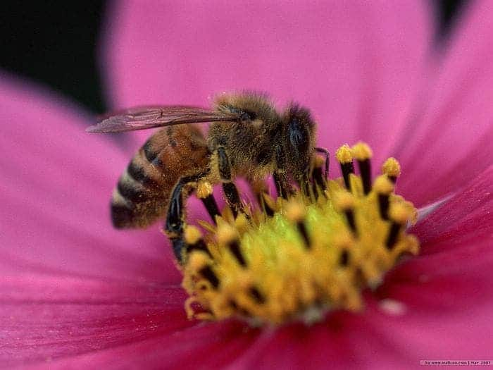 Flowers Use Electrical Signals To Summon Bees