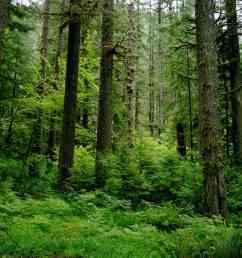coastal temperate rainforest image credits sam beebe [ 1024 x 768 Pixel ]
