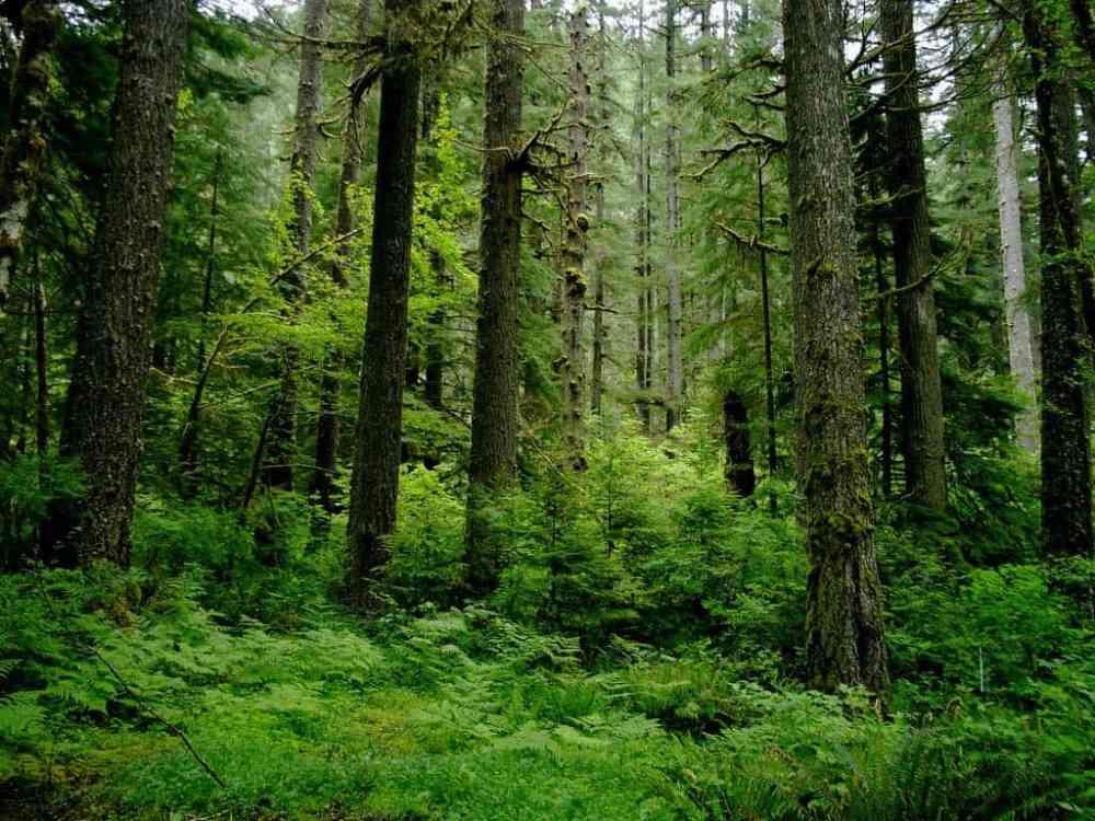 medium resolution of coastal temperate rainforest image credits sam beebe