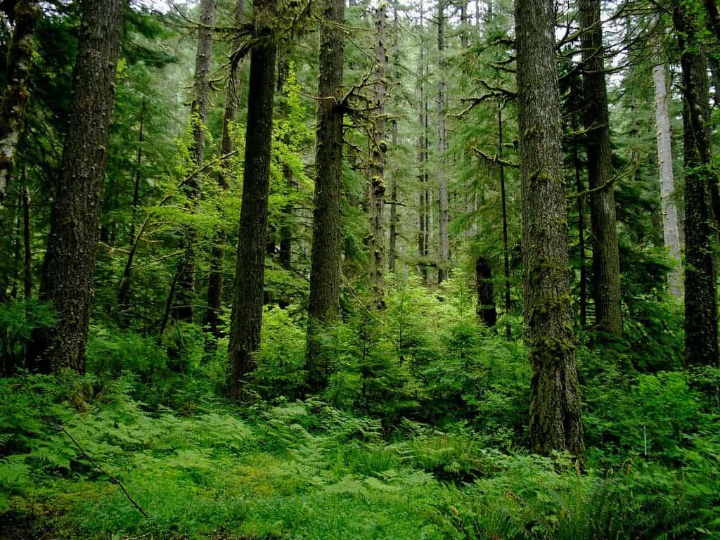 hight resolution of coastal temperate rainforest image credits sam beebe