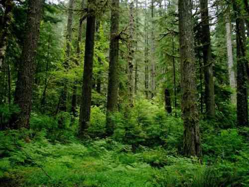 small resolution of coastal temperate rainforest image credits sam beebe