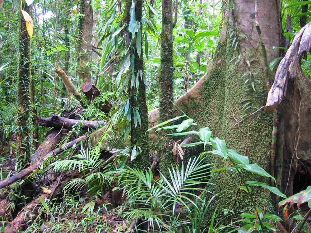 medium resolution of tropical rain forests contain millions of species image credits thomas schoch