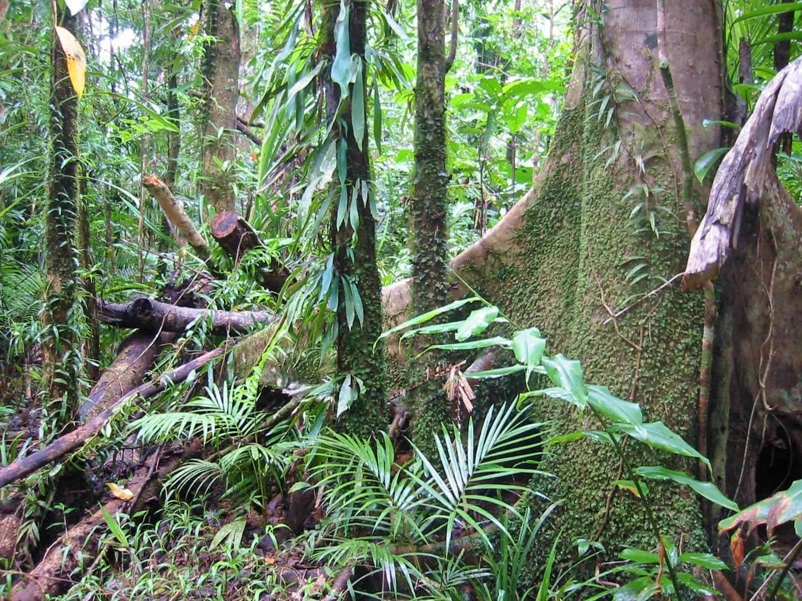 hight resolution of tropical rain forests contain millions of species image credits thomas schoch