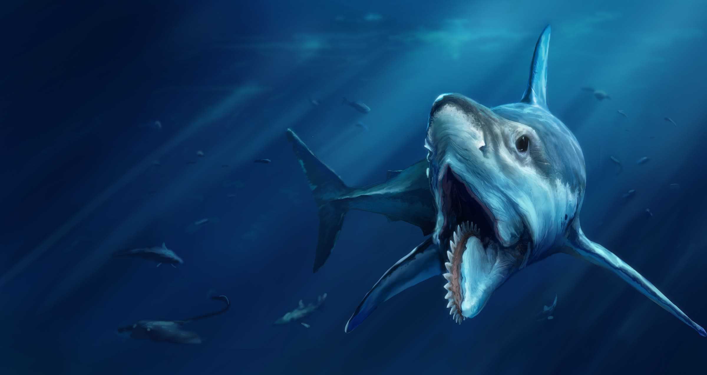 Mindblowing Fact Of The Day Sharks Are Older Than Trees