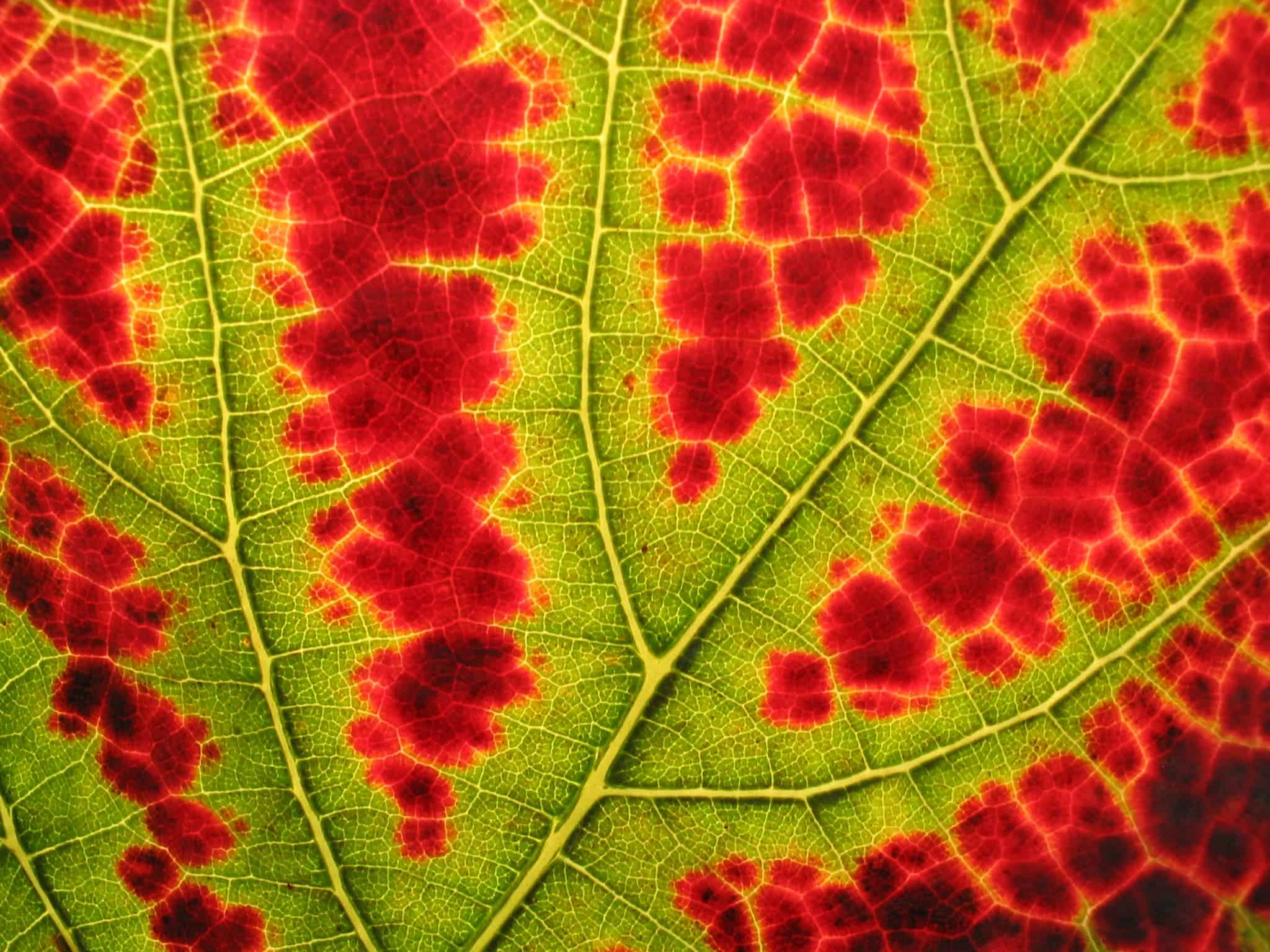 The Science Behind Why Leaves Change Color In Autumn