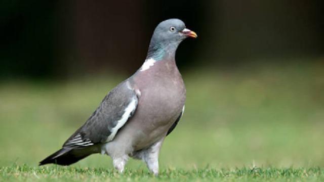 38 Jenis Burung Langka di Hutan Damarwulan  Regional