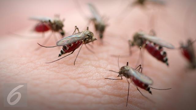 Jenis Nyamuk Dan Bahayanya Bagi Kesehatan Kenali Untuk Pencegahan Penyakit Hot Liputan6 Com