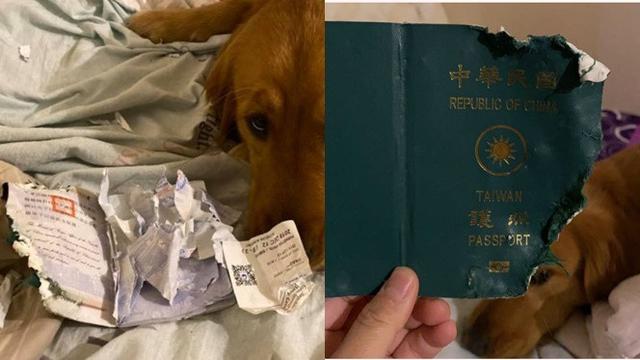 Selamat dari Virus Corona, Kisah Anjing Rusak Paspor Majikan Ini Bikin Haru