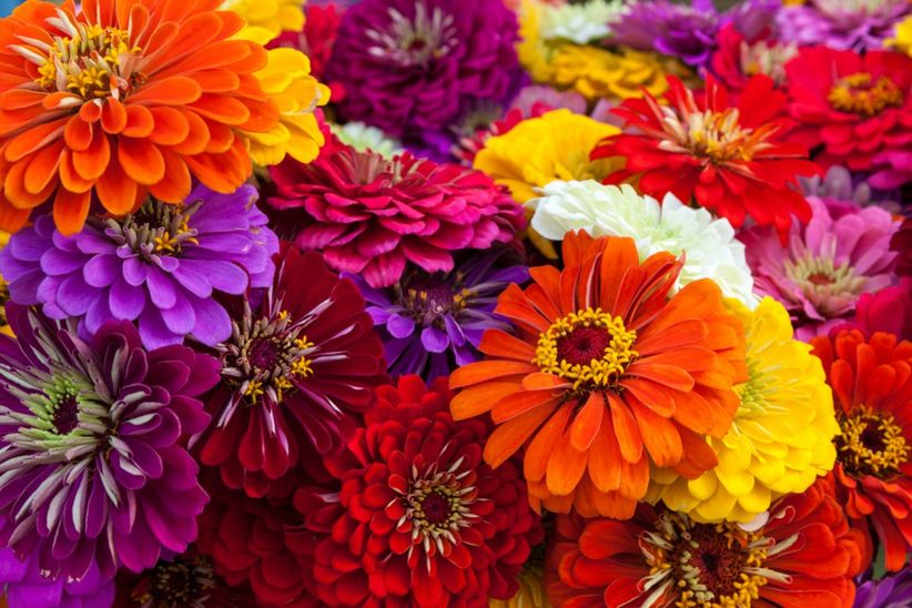 40 flores para boda segn la temporada reconcelas todas