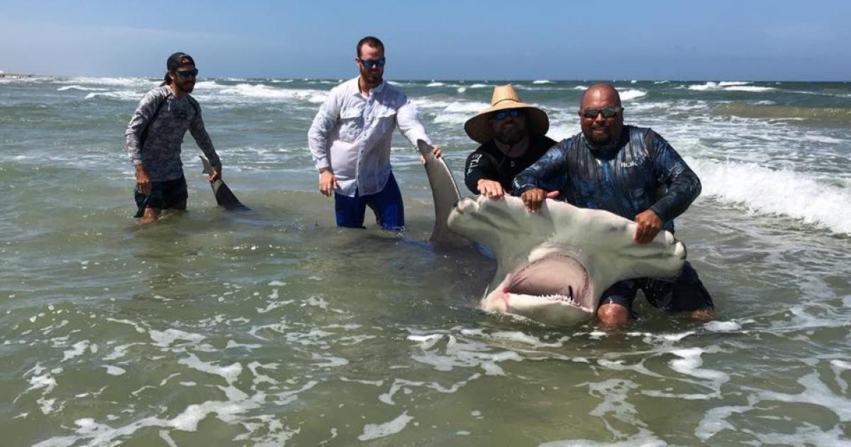 Impresionante Un Pescador De Texas Atrapo Un Tiburon