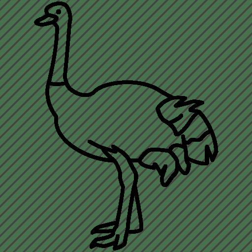 African, bird, farming, flightless, largest, ostrich