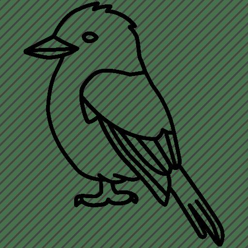 Australia, australian, bird, bush, kingfisher, kookaburra