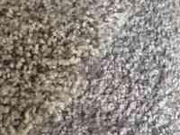 Mohawk Lifeproof Carpet Reviews