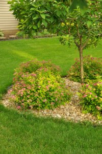 Magic Carpet Spirea - Plant Library - Pahl's Market ...