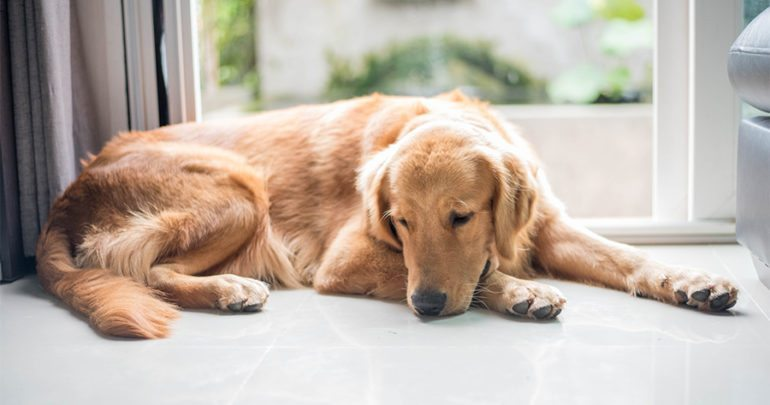 dog depression 5 warning