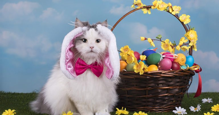 Cute Fat Cat Wallpaper 10 Photos Of Pets Trying Their Hardest To Be Easter Bunnies