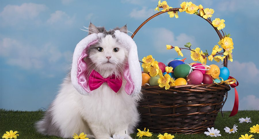 Cute And Funny Cat Wallpaper 10 Photos Of Pets Trying Their Hardest To Be Easter Bunnies