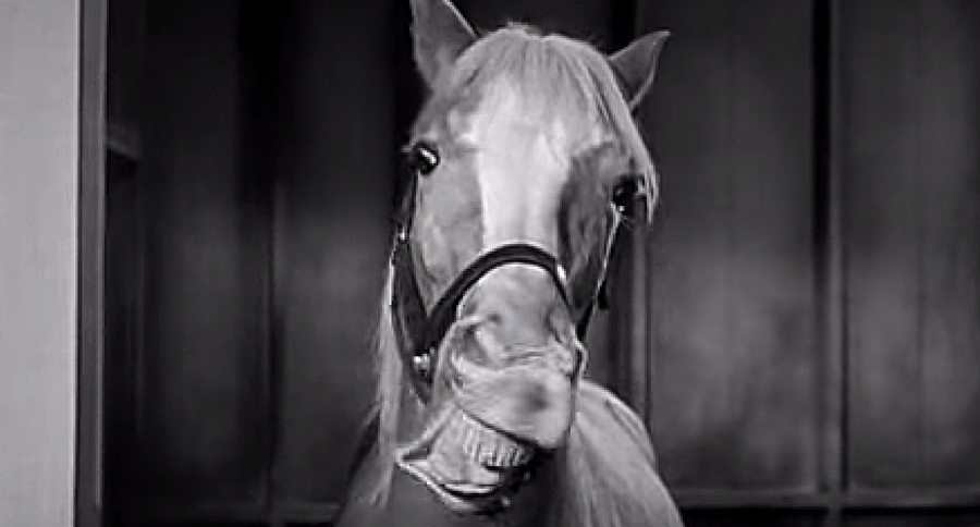 Mr Ed The Talking Horse Hollywood Secrets That You
