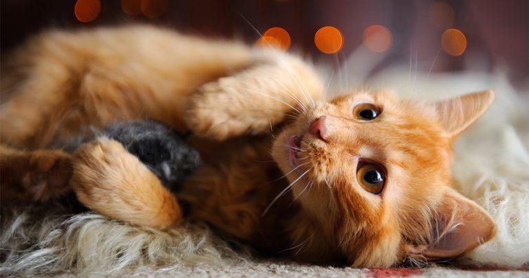 Cute Sleeping Kitten Wallpaper 10 Best Cat Toys That Are Guaranteed Keep Your Kitties