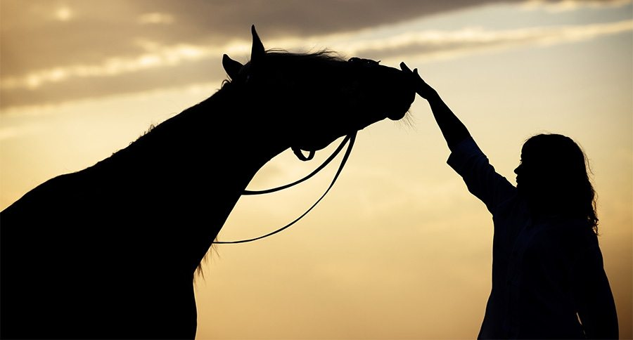 My Love Is Gone Quotes Wallpaper Comforting Words For Those Who Have Lost A Horse