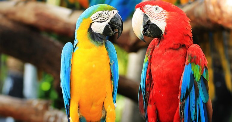 parrots everything you need
