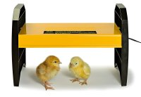 How Long Do Baby Chicks Need a Heat Lamp or Heat Source?