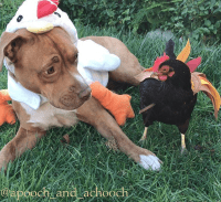 10 Chicken Costumes to Get Your Coop Ready for Halloween