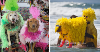 10 Creative Dog Halloween Costume Ideas from Surf Dog Ricochet