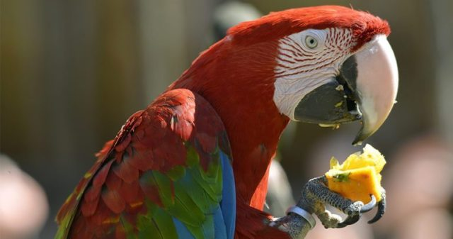 Image result for MACAW parrots BABIES HEALTH BENEFITS