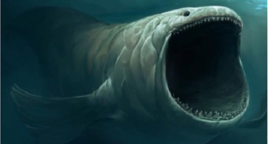 Blue Marlin Underwater Hd