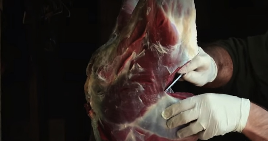 This Video Shows Exactly How to Process Deer Meat