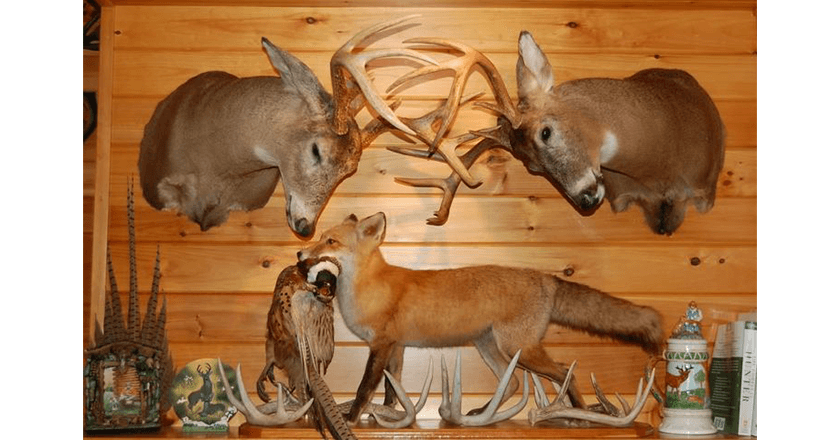 10 of the Greatest Taxidermy Jobs Ever