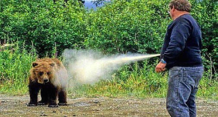 Image result for bear spray