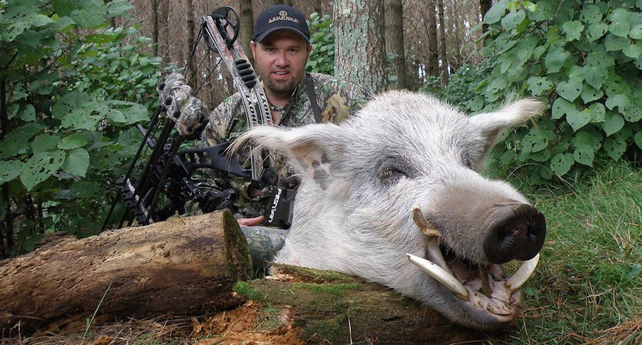 Largest Wild Boar Record