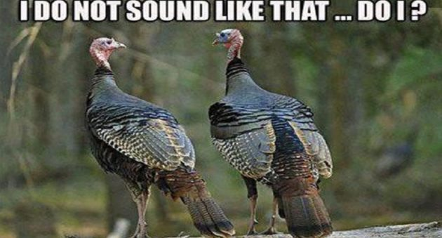 Fall Hunting Wallpaper 11 Turkey Memes That Will Get You Ready To Blast Those Birds