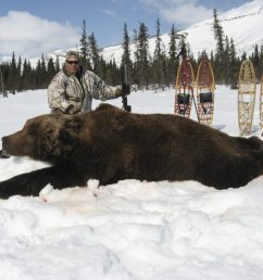 biggest grizzly bear kills in the record books bob steed [ 1024 x 768 Pixel ]