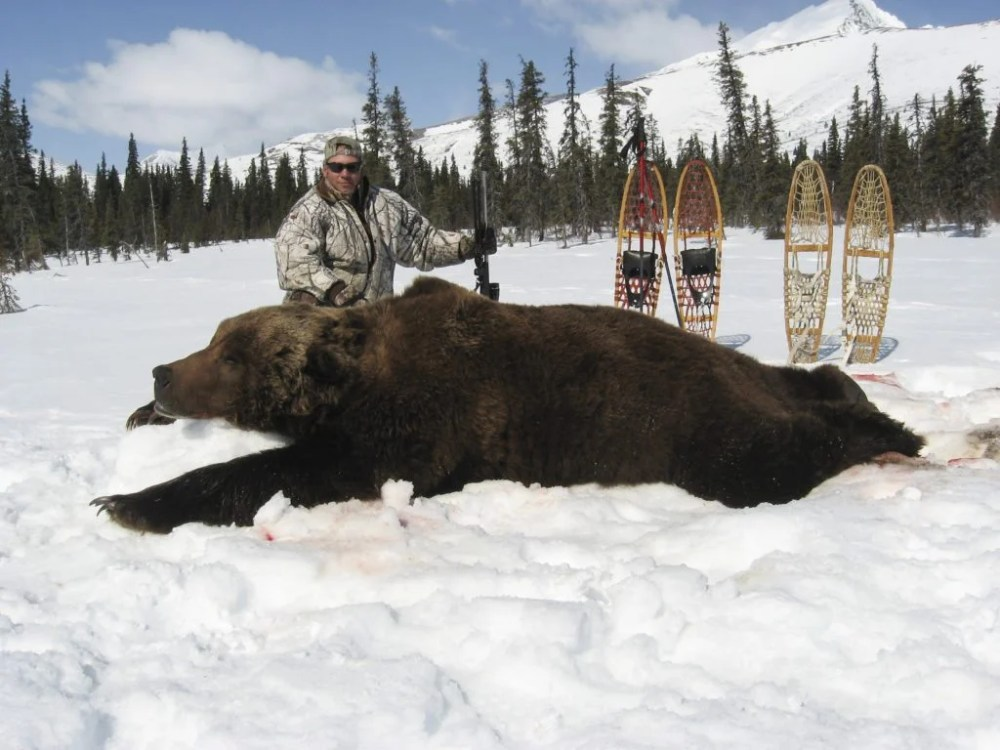 medium resolution of biggest grizzly bear kills in the record books bob steed