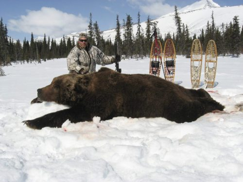 small resolution of biggest grizzly bear kills in the record books bob steed