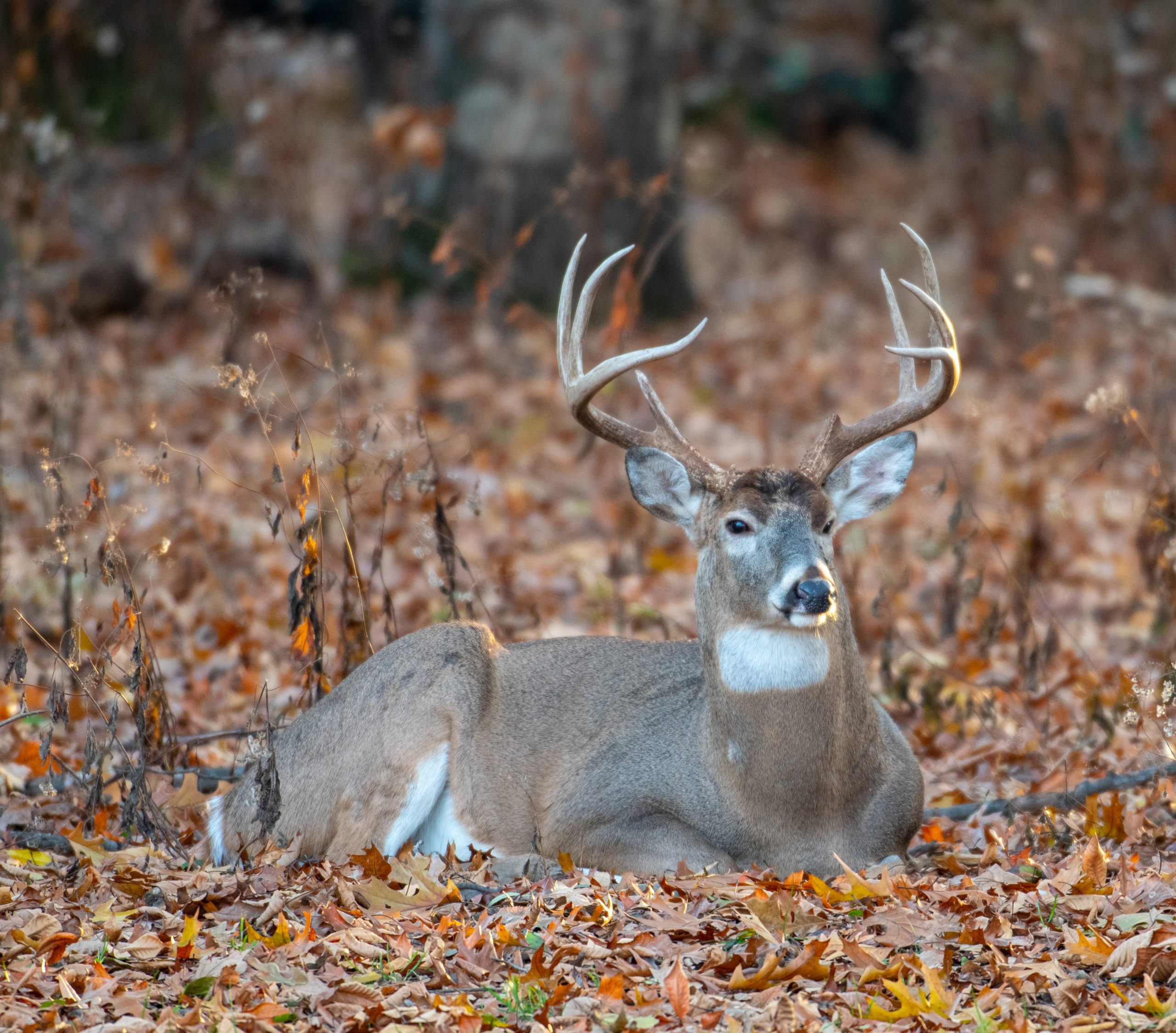 Deer Habitat Zones And How To Use These Necessities For