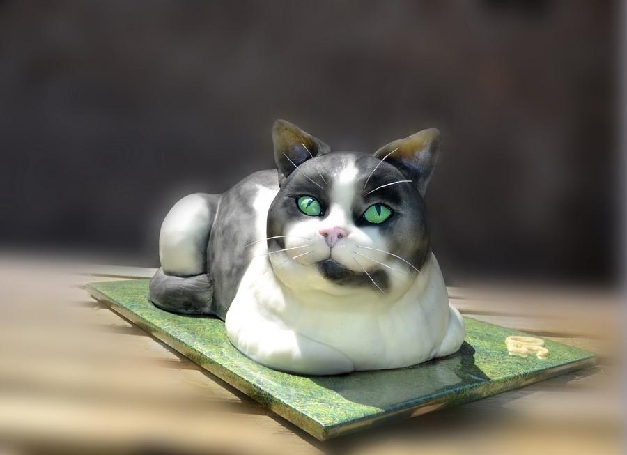 Black And White Cat  CakeCentralcom