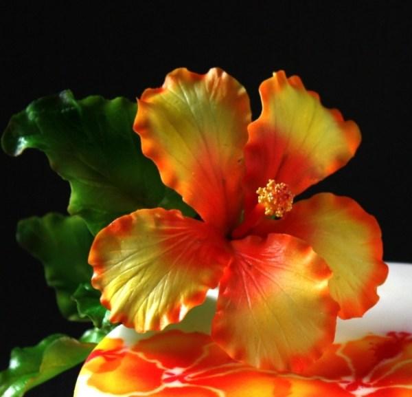 Sugar Flower Hibiscus