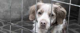 EXCLUSIVE: VA Oversight Office Finds Evidence Of Abuse And Oversight Failures In Dog Experimentation Program