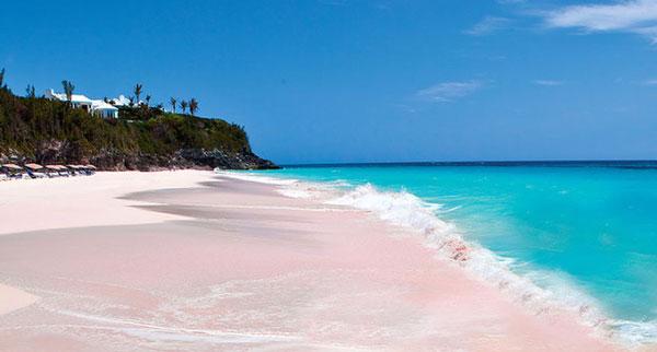 【可遇不可求?】 一生人必去的粉色海洋 - Fever Travel