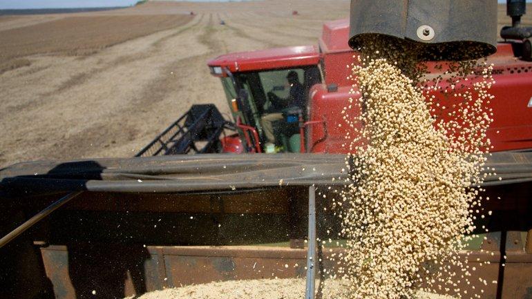 Empiezan a ingresar dólares: exportadores del agro liquidaron USD 481 millones