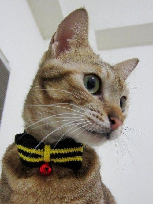 黃色條紋蝴蝶結毛線貓項圈 - 【今齡 虎斑貓】.純手作 | Pinkoi