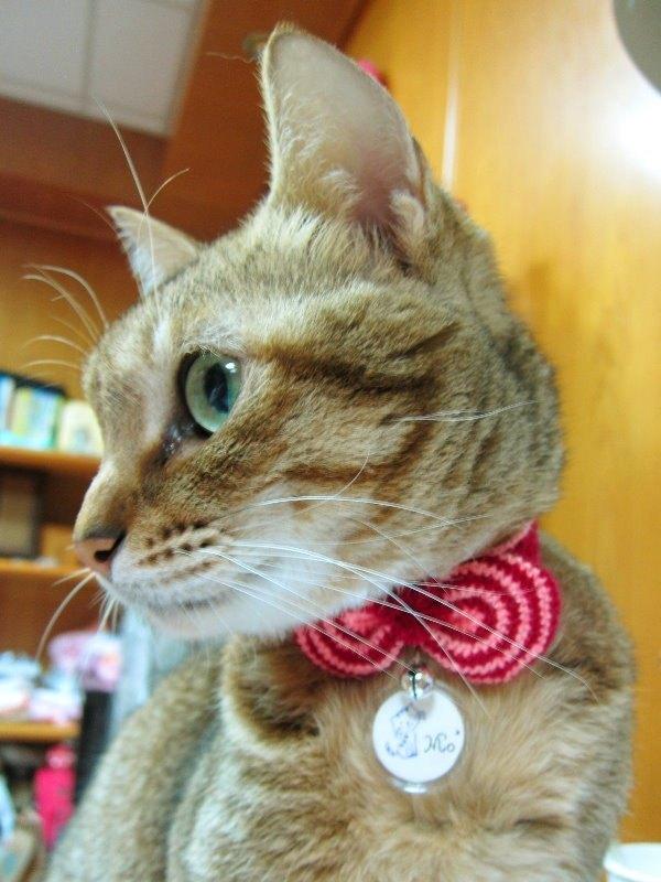 圈圈條紋蝴蝶結.貓項圈 - 設計師 【今齡 虎斑貓】.純手作 | Pinkoi