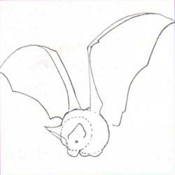 Bagaimana untuk menarik haiwan: kelawar, imej # 27