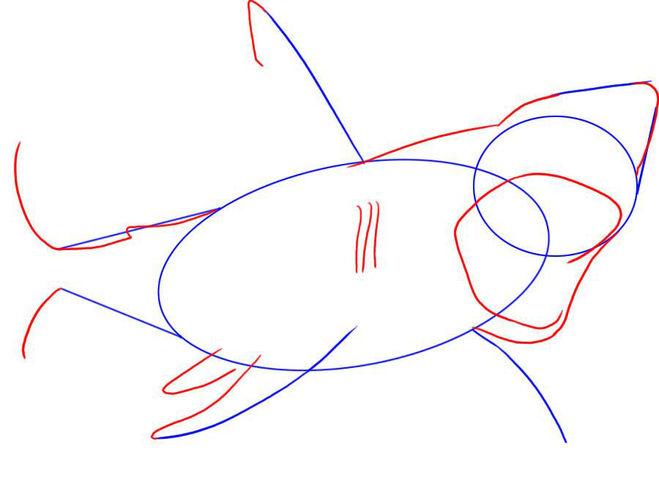 Basit bir şekilde köpekbalığı (2. adım)