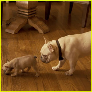 Doritos Puppy Dad Super Bowl Commercial 2015 - Watch Here!