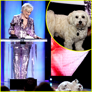 Glenn Close Wins at Spirit Awards 2019, But Her Dog is the Real Winner Here!